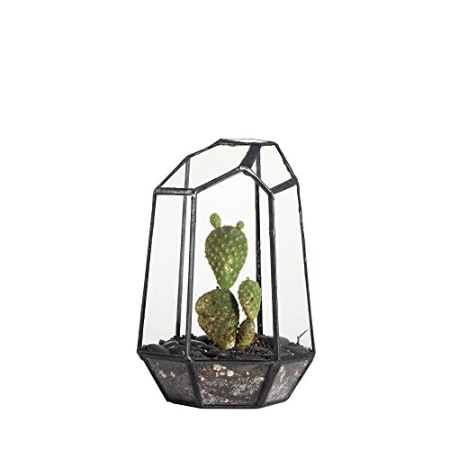 59-inches-height-handmade-irregular-glass-geometric-air-plants-terrarium-container-miniature-tableto