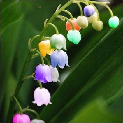 Amazon.com  Unique Flower Bonsai Import Colorful Bell
