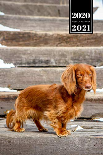 Dachshunds Dog Pup Puppy Doggie Week Planner Weekly Organizer 2020 / 2021 - Standing on Stairs: Animal Lover Pet Owner Gift Idea - Schedule Notebook Journal in 6' x 9' Inch