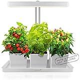 GrowLED LED Indoor Garden, Herb Garden, Kitchen Garden, Height Adjustable, Automatic Timer, 24V Low Safe Voltage, Ideal…