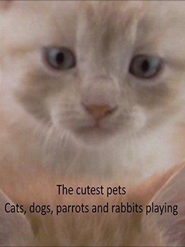 The Cutest Pets - Cats, Dogs, Parrots and Rabbits Playing