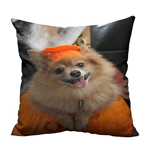 YouXianHome Home Decor Pillowcase Halloween Costume Puppy Durable
