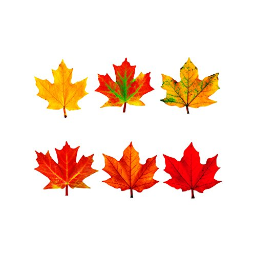 Trend Enterprises Classic Accents Variety Pack, Maple Leaves (T-10958)