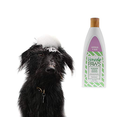 Honest Paws Natural Dog Shampoo and Conditioner in One for All Dogs and  Puppies, Vanilla Almond Scent, Pack of 2 | Oatmeal Dog Shampoo and  Conditioner