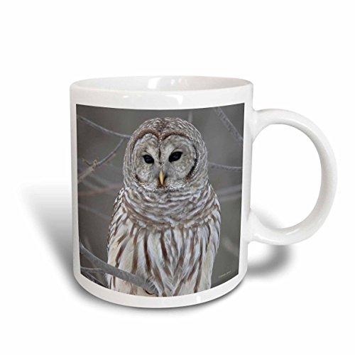 3dRose Barred Owl Mug, 11-Ounce