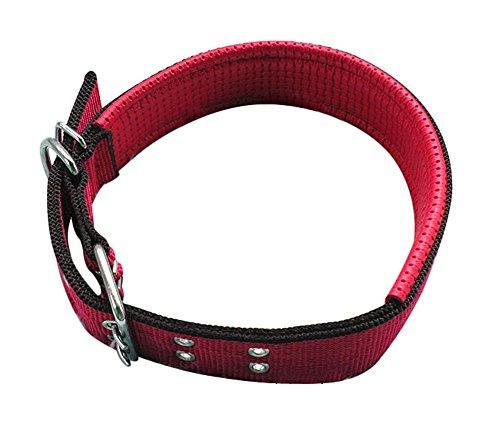 Freerun Pet Dog Collars Adjustable Sizes Durable Nylon Seafoam Collar - Red, S (Costume Direct New Business)