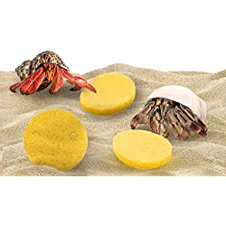 3-Pack Sea Sponges for Hermit Crabs - Moisture Cocoon That Keeps Crabs Moist and Hydrated - Prevents Accidental Drowning and Suffocation - 100% All Natural and Safe