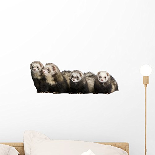Wallmonkeys Ferret-mustela Putorius Furo Wall Decal Peel and Stick Graphic (18 in W x 7 in H) WM27606