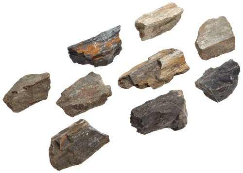 American Educational Plant Petrified Wood Fossil (Pack of 10)