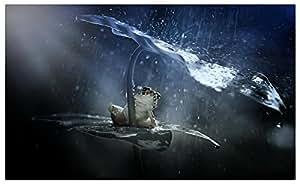 Frog-hidden-from-the-rain-under-leaf magnet fridge magnets Furniture & Decorations