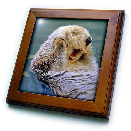 3dRose Danita Delimont - Otters - Yawning Endangered California Sea Otter Floating, Monterey, California - 8x8 Framed Tile (ft_314716_1) ()