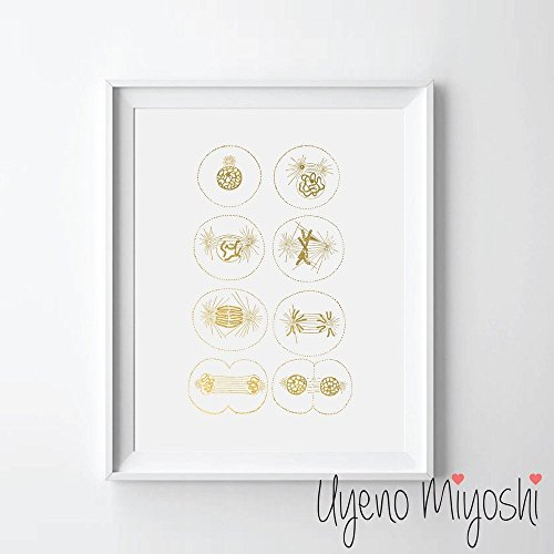 Cell Division Mitosis Gold Foil Art Print Biology Lover Gift Gold Foil Print Dorm Room Science Wall Art Decor Gold Print 08 x 10 -