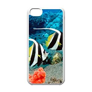 iPhone 5C Csaes phone Case Finding Nemo HDDY92671