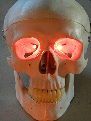 24 inch, Battery Operated, Led Eyes for Masks, Skulls and Halloween Props (Red) -