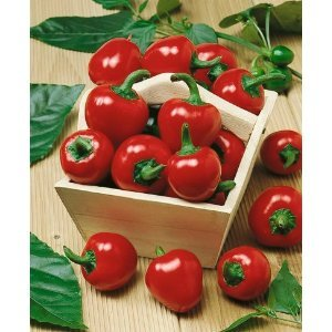 10 Cherry Bomb Red Hot Chile Pepper Seeds