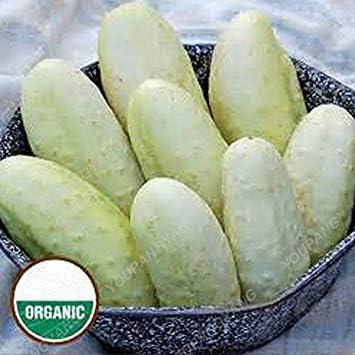 Rare 50Pcs Lila Gurke-Samen Bio Köstliches Gemüse Pflanzen für Hausgarten-Pflanzen der Gesunde Cuke Samen Gurke-Samen
