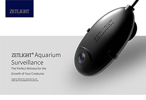 Aquarium Camera Underwater - 1