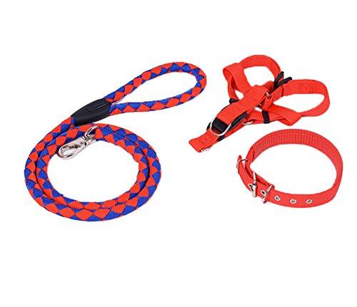 Strong Hard Wearing Safe Nylon Rope Dog Leash and Soft Adjustable Dog...