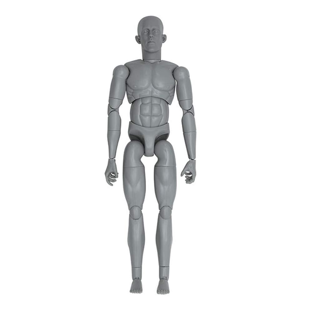 Art S. Buck Anatomical Manikin - Male by Art Alternatives