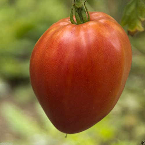 Hungarian Heart Tomato Seed ,A.K.A,Oxheart Tomatoe,Open Pollinated !HUGE Tomato