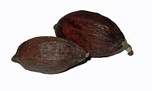 1 Stück ganze Kakaoschote Kakaofrucht Kakaobohne