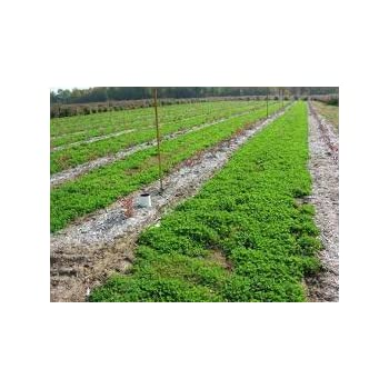 Amazon Com Fall Cover Crop Seed Mix 5 Pounds Garden