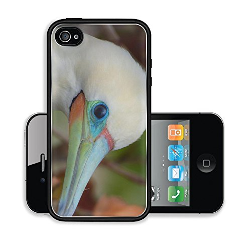 iPhone 4 4S Case Red footed Booby Eastern Island Midway Atoll Image 17065209217
