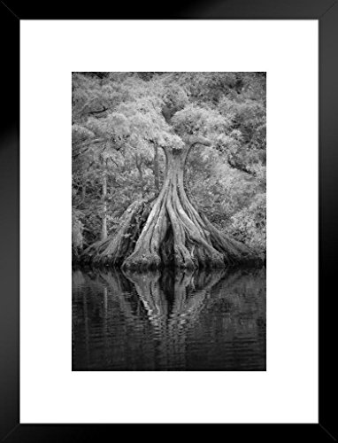 (Poster Foundry Expansive Tree Roots in River Black and White Photo Art Print Matted Framed Wall Art 20x26 inch)