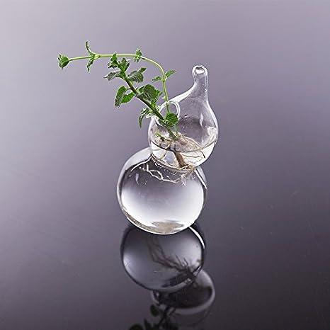 Florero Colgante de Pared Jarrón Maceta Botella Forma de Calabaza Cristal Decoración Planta Flor: Amazon.es: Hogar