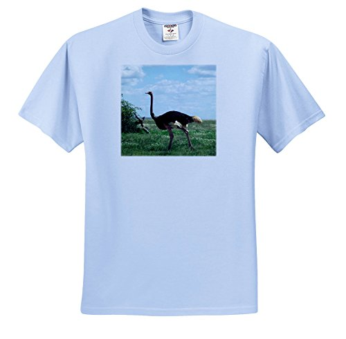 3dRose Sven Herkenrath Animal - An Impressive Ostrich Walking Through The Landscape - T-Shirts - Light Blue Infant Lap-Shoulder Tee (12M) (TS_275830_76)
