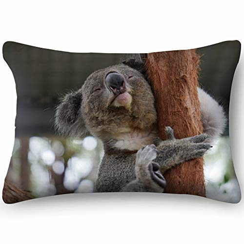 Koala Bear Taken Australia Hq Camera Animals Wildlife Nature Cotton Linen Blend Decorative Throw Pillow Cover Cushion Covers Pillowcase Pillow Shams, Home Decor Decorations For Sofa Couch Bed Chair 20 (The Best Sofa Bed Australia)
