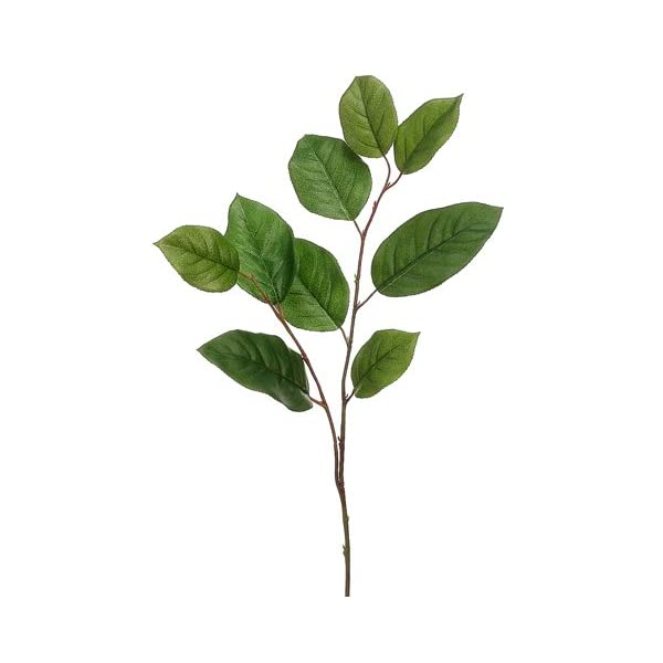 30″ Salal Leaf Spray Two Tone Green (Pack of 12)