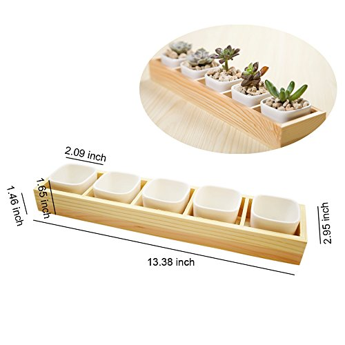 White ceramic Plant Container with Wooden Plant Container Box Tray, Succulent Planter Pot perfect for in your home or office table decoration.