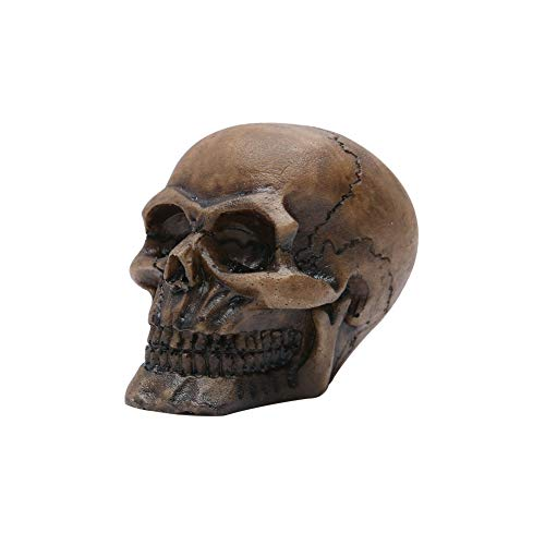 Whale GoGo 1 Piece Small Resin Realistic Replica Human Skeleton Skull Model Halloween Decoration & Gift]()