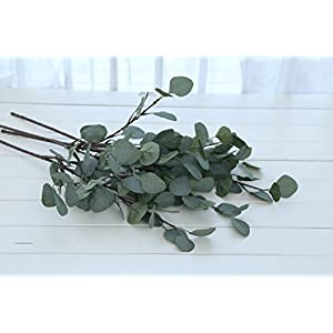 ZHIIHA 3 pcs Artificial Eucalyptus Garland Long Silver Dollar Leaves Foliage Plants Greenery Fake Plastic Branches Greens Bushes 3