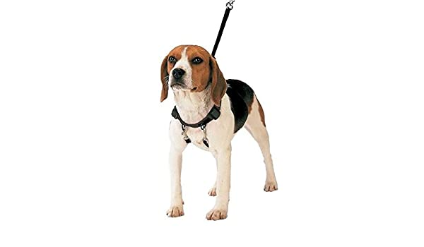 Gloria - Arnés corrector antitirones para perros (40-60cm) (Negro ...