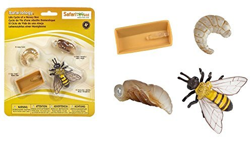 Safari Ltd Safariology Collection 3-Piece Set - Life Cycle of Honey Bee, Monarch Butterfly, and Green Bean - Each Set Includes 4 Hand Painted Figurines and Educational Information - For Ages 4 and Up