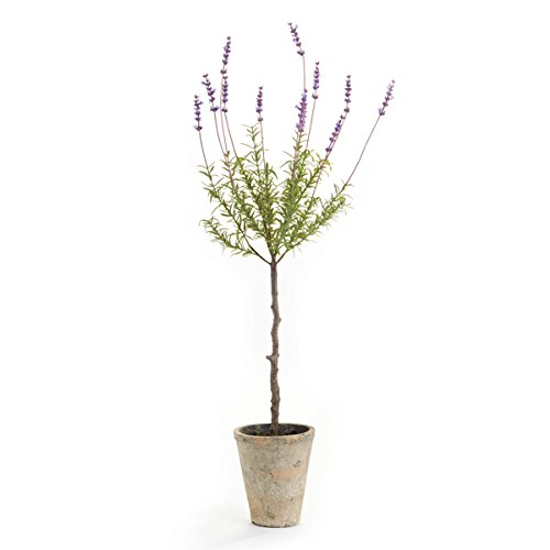 CONSERVATORY FRENCH LAVENDER TOPIARY POTTED HERB 29.5-IN.