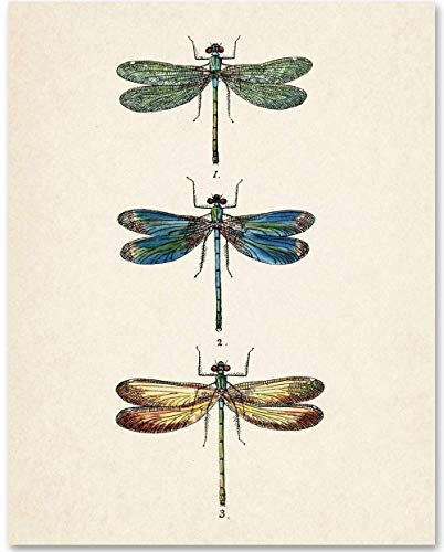 Dragonflies Illustration - 11x14 Unframed Art Print - Makes a Great Home Decor Under $15