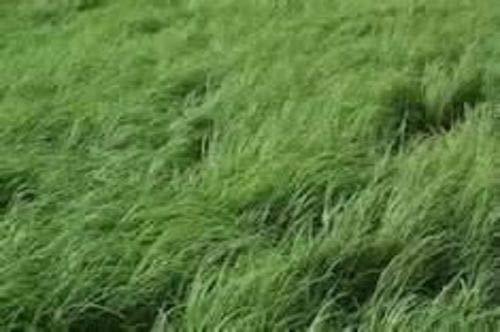 FARMERLY Las Semillas orgánicas: 10 Libras de Semillas: El ...