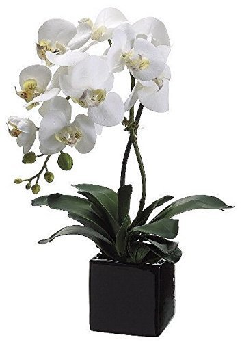 Allstate Floral 20-Inch Artificial Phalaenopsis Orchid Plant in Ceramic Pot (White Cream)