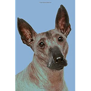 Xoloitzcuintli: Artified Pets Journal/Notebook/Diary 160 Pages 39