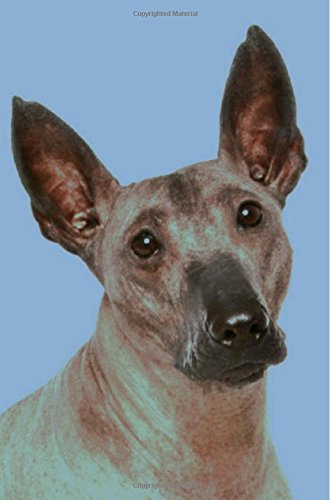 Xoloitzcuintli: Artified Pets Journal/Notebook/Diary 160 Pages 1
