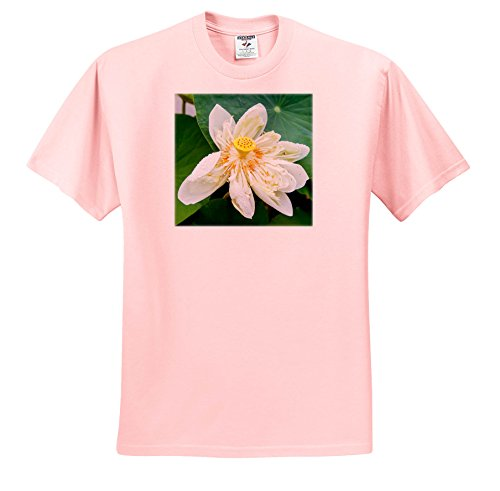 3dRose Danita Delimont - Flowers - Lotus Blossom Flower, Vietnam, Asia - T-Shirts - Adult Light-Pink-T-Shirt Large - T-shirt Blossom Womens Light