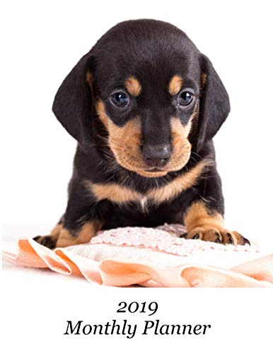 (2019 Monthly Planner: Dachshund Puppy Cover - Includes Major U.S. Holidays and Sporting Events)