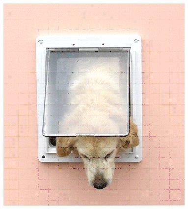 DD 中型犬用ドッグフラップ DF-L ブラウン B007X0PATQ ブラウン
