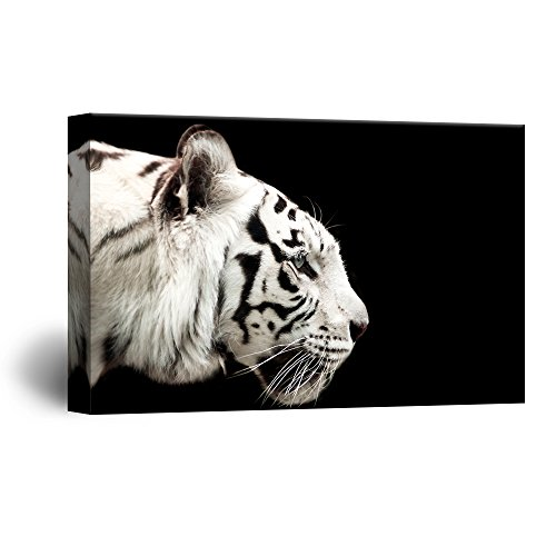 A White Tiger on Black Background