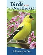 Birds of the Northeast: Your Way to Easily Identify Backyard Birds