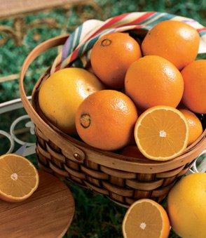 honeybell-oranges-tangelos-1-4-bushel