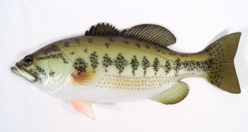 Handpainted Large Mouth Bass Wall Mount Decor Plaque Game Fish Replica 18